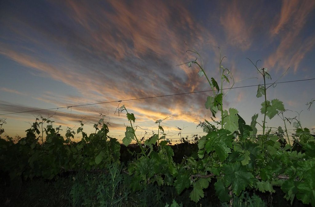 Have a Grape Trip! Explore the Klein Karoo Wine Route